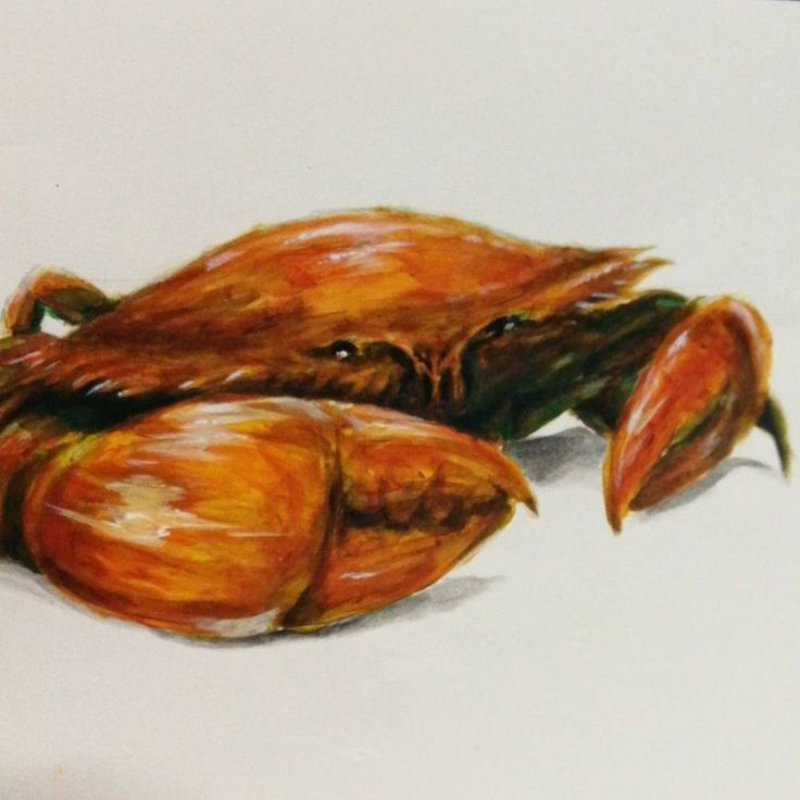 I shell post this crabby pun here too... . . . . . #art #artistsoninstagram #acrylicpainting #realismpainting #crab #orange #painting #drawing #artist #illustration #colours #螃蟹 #画 #画画
