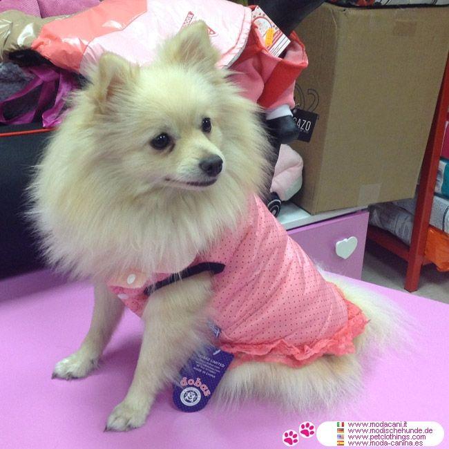 Rosa Gepolsterten Hundemantel mit Tupfen #Hunde #Spitz - Schöne gepolsterten Hundemantel, ärmellos und mit asiatischem Stehkragen; in 5 Größen von XS bis XL für Chihuahua, Pudel, Malteser, Pudel, ...