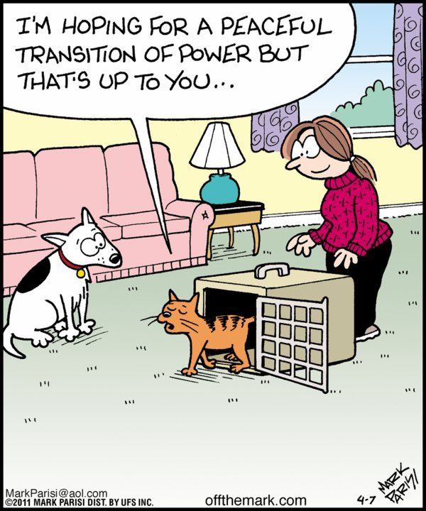 ".LOL!....anyone owning "" cat and dog"" KNOW  this is absolutely true!"