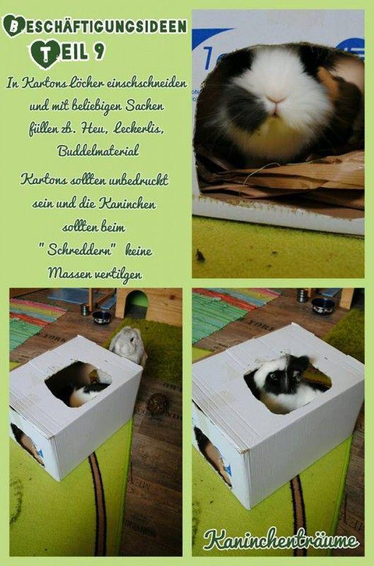 9 kartons kaninchen                                                                                                                                                                                 Mehr