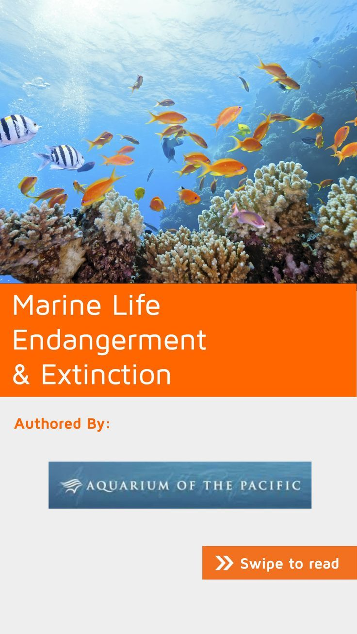 Today human activity is threatening ocean health, shrinking ocean habitats and decreasing animal populations. However, human activity has caused more extinctions of land-based species and fewer in the ocean. By acting quickly we may be able to halt this trend and avoid ocean extinctions of the scale we've already seen on land. #NoteStream #nature Download now for free.