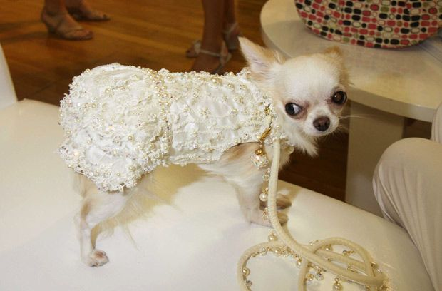 Pet Fashion Week in New York where despite a challanging economy there were expensive gowns and jewels for pets. Gowns went for over $1000 dollars and dresses were going for as much as $1500