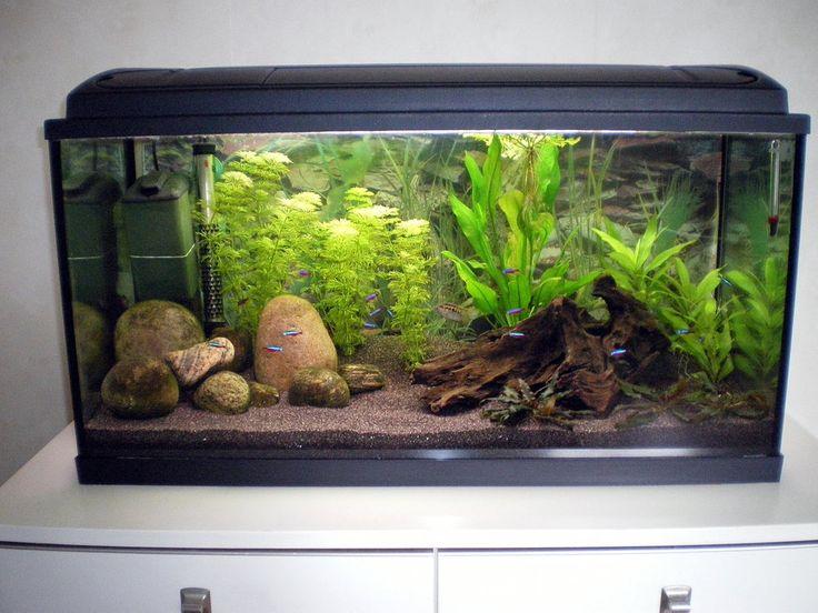202 Best Aquarium Setups Images On Pinterest Aquarium
