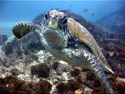 Byron Bay Diving - First Dive: $99  –  Second Dive: $89 Includes full equipment hire and guide, duration approximately 40-50 minutes