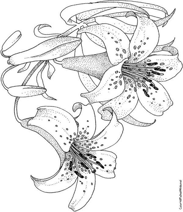 princess tiger lily coloring pages - photo#13
