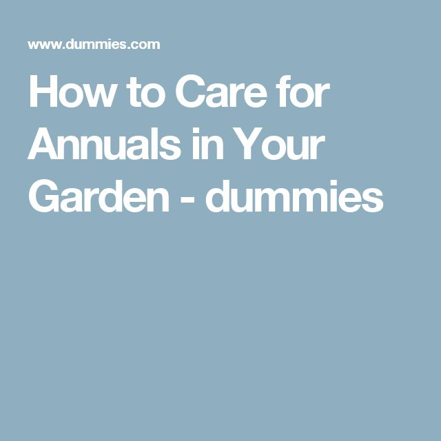 How to Care for Annuals in Your Garden - dummies