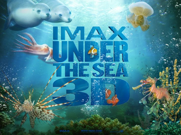 IMAX Under The Sea (4) - This HD IMAX Under The Sea (4) wallpaper is based on Under the Sea 3D N/A. It released on N/A and starring Jim Carrey. The storyline of this Documentary, Short N/A is about: An underwater look at the diverse coastal regions of Southern Australia, New Guinea and the Indo-Pacific areas and the... - http://muviwallpapers.com/imax-sea-4.html #4, #IMAX, #Sea #Movies
