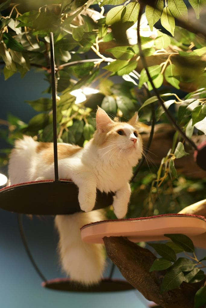 Awesome kitty tree