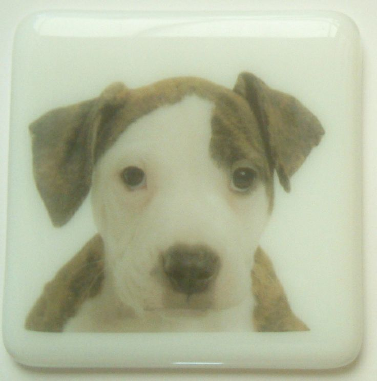 You provide the photograph of your pet and we will fused the picture onto a glass coaster. These coaster are dishwasher proof.