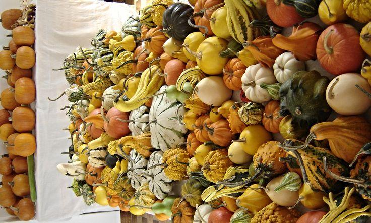 Siamo un'azienda agricola che per passione e amore verso le zucche coltiva oltre 150 varieta' di zucche ornamentali e decorative. effettuiamo consegne in tutta