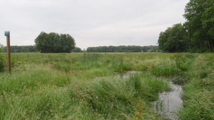 2016-06-19 De gele wandelroute bij De Kranenkamp nabij Wesepe loopt door een mooi rustgebied