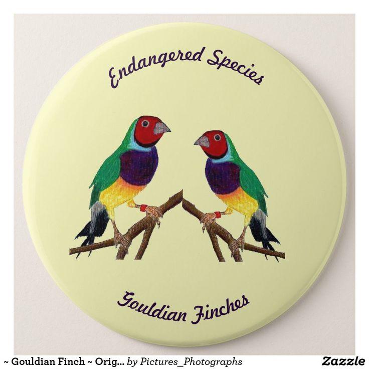 ~ Gouldian Finch ~ Original Art ~ 6 Cm Round Badge