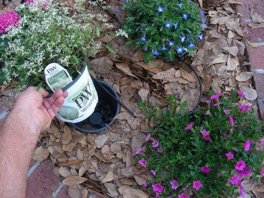 10 Gardening Hacks To Turn Your Thumb Green   Snookshack Source: helathy-holistic-living