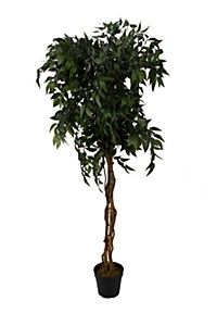 5FT FICUS TREE