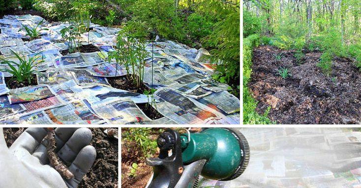 Pesticidas y repelentes orgánicos 100%, que te ayudarán a mantener lejos los insectos no deseados, con total respeto al medio ambiente.
