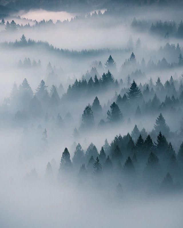 Постер лес в тумане