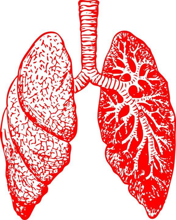 Vurčitém okamžiku svého života snad každý znás měl nebo má nějaké dýchací potíže. Zánět průdušek, astma, různé druhy kašle, plicní poruchy a nemoci jsou běžnými důsledky infekcí, alergií nebo kouření. A často lékaři jen krčí rameny, nevědí, co dělat. Vybaví vás léky a musíte stouto nemocí žít. Existuje však přírodní lék, který vám může pomoci …