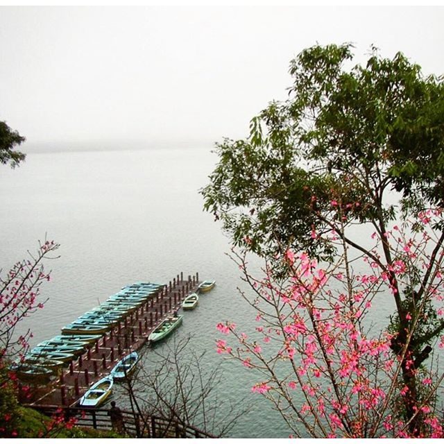 【w.j.yang】さんのInstagramをピンしています。 《· · 清晨時分的日月潭。南投,台灣。 · Sun Moon Lake in the early morning. Nantou, Taiwan. · · #amazingtaiwan#vscotaiwan#taiwan#sunmoonlake#nantou#台灣#台湾#旅行#台湾旅行#日月潭#南投#台北#台中#台南#高雄#peaceful#寧靜#igerstaiwan#綺麗#感動#wharf#boat#sakura#桜#はな#flower#flora#花》
