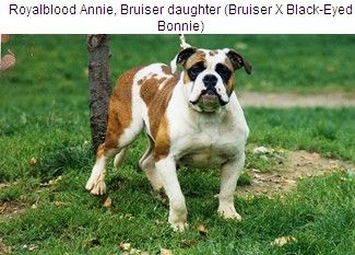 Famous Leavitt Bulldogs and Old English Bulldogs - LEAVITT BULLDOG and OLD ENGLISH BULLDOG