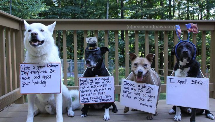 Happy Labor Day!  www.peaceandpaws.org