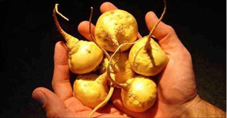 A maca (Lepidium peruvianum), também conhecida como maca-peruana, é uma planta que se assemelha a um nabo e cresce nas montanhas andinas do Peru.A raiz da planta é seca e utilizada em pó há mais de dois mil anos para combater a fadiga e agir como um estimulante.