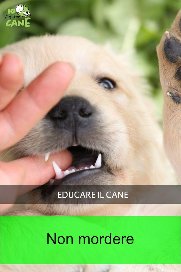 Non Mordere Di Tutto Un Po Cani Animali Animali Domestici