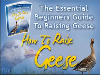 How To Raise Geese. Finally! An Easy to Follow Guide to Raising Geese Successfully the First Time, AVOID the Need To Visit The Vet and Save Money from Deadly Mistakes that first time Geese owners are susceptible to! Who Else Wants a Beautiful, Healthy Geese…Without Having to Spend a Bundle or Constantly Worry about Your Geese's Health?