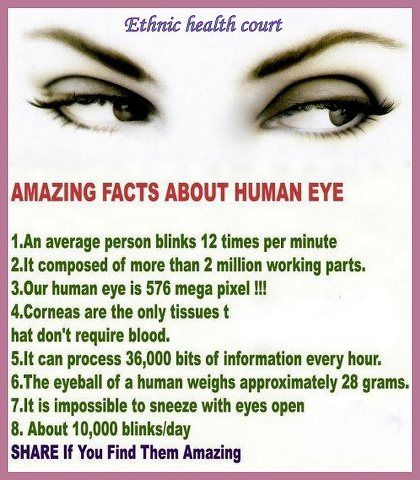 amazing facts about eyes with pictures - Google Search