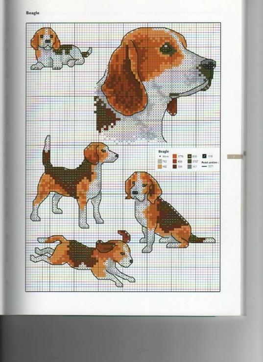 Beagle from 'Animaux de compagnie' by Claire Crompton, /Mango Pratique/