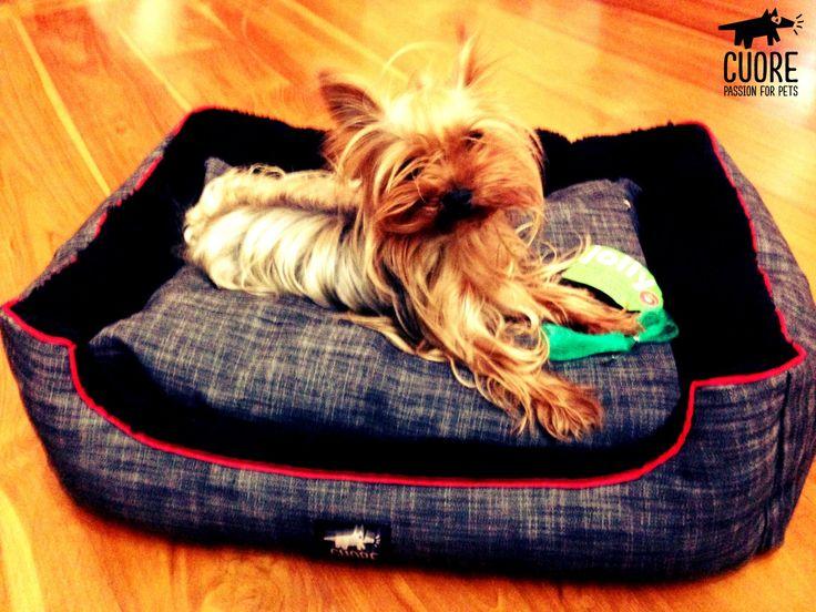 Denim Lounge talla S. Perfecta para los más pequeños!! #cuore #passionforpets #instadog #doglover #ilovemydog #dog #petsagram #photooftheday #adorable #pet #dogoftheday #instagramdogs #animals #yorkie #yorkshire #dogbed