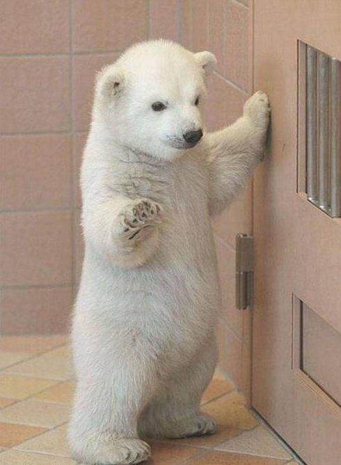 Baby polar Bear | http://your-cute-baby-animals-gallery.blogspot.com