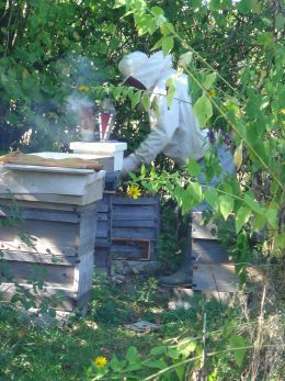 bee keeping for beginners - why keep bees?