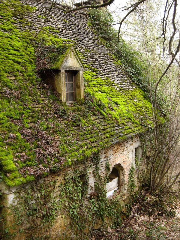 Old stone cottage with moss covered roof nestled in woods A French Lady In NC