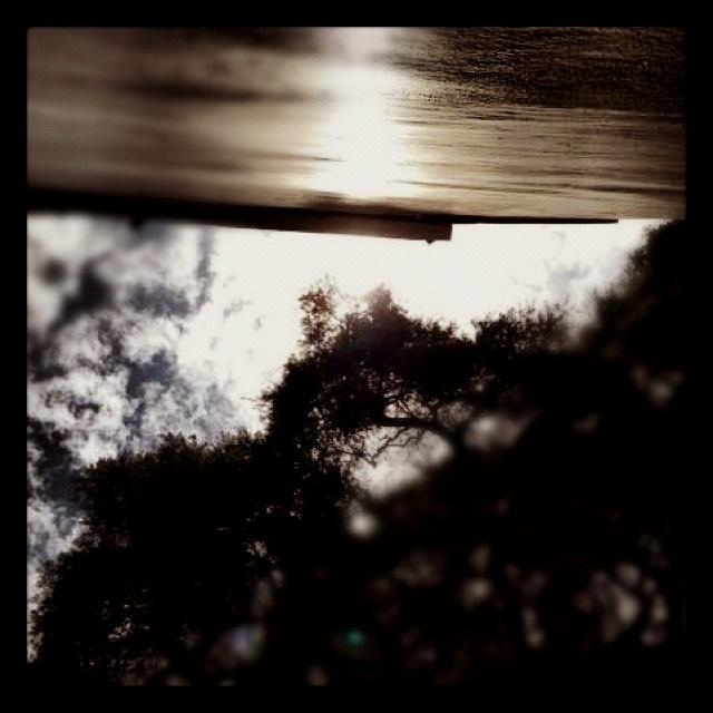 """El cielo de """"el tule"""": Sky, Heaven, El Tule"""