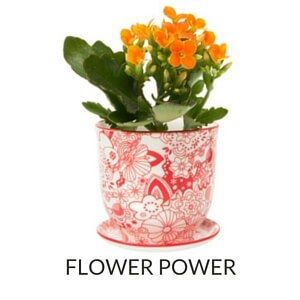Modeled after teacups, this porcelain Brighton Pot and Saucer Planter will make a charming addition to your country-style or transitional home.  Available in 7 fresh & fun patterns. Our fave? The Classic Red.   buythiscookthat.com/flowerpot