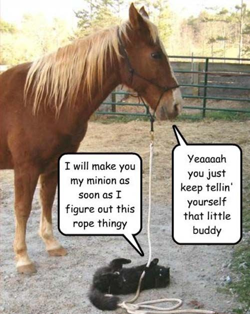 25+ great ideas about Cute horse quotes on Pinterest ...
