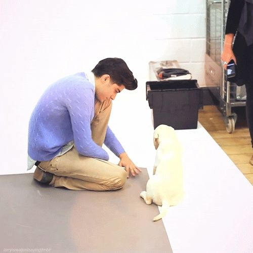 Zayn Malik with a puppy for the Wonderland photoshoot  - Sugarscape.com