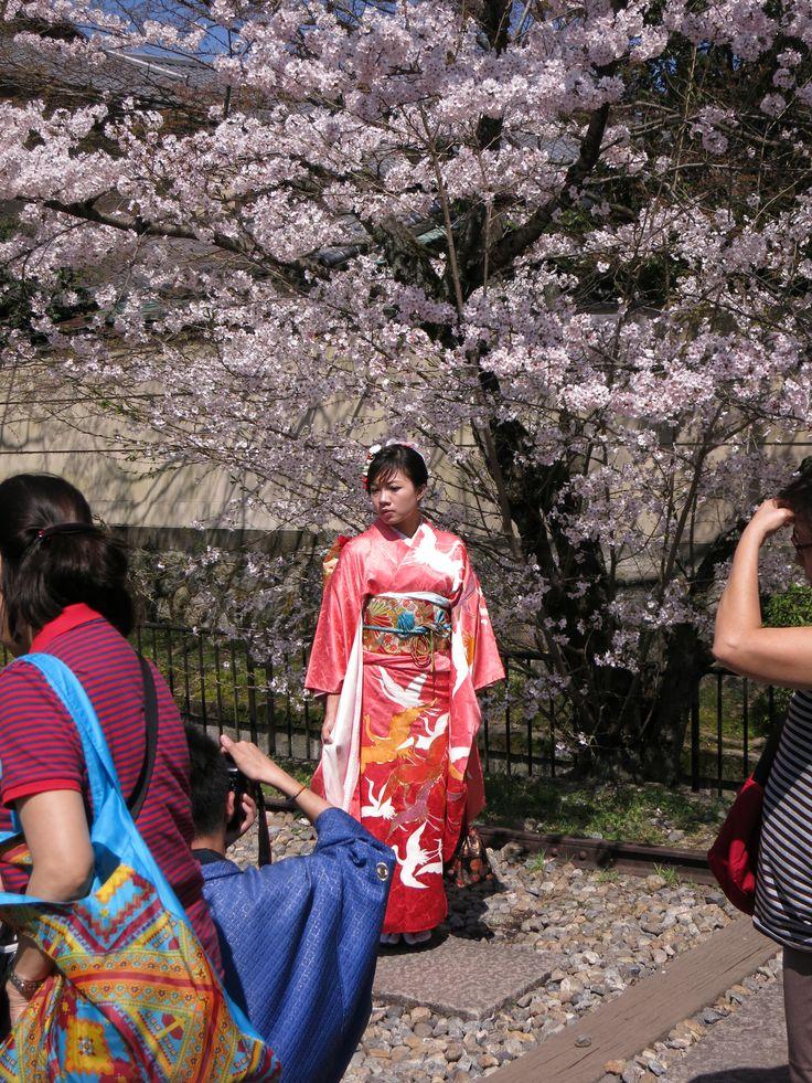 #Hanami, ossia la fioritura dei ciliegi. Se farete un #viaggio in #Giappone con #AnimeClick potrete vedere sia i ciliegi che le belle giapponesi in #kimono che i fanno fotografare sotto di essi http://viaggigiappone.animeclick.it