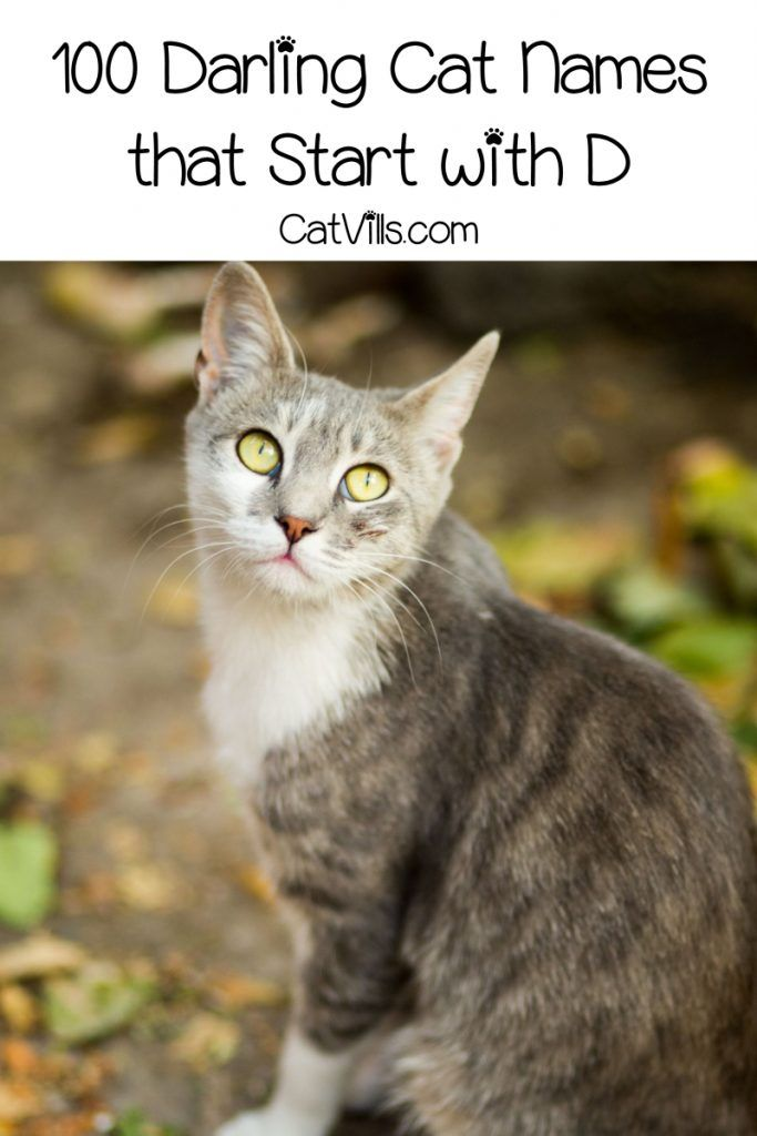 100 Darling Cat Names That Start With D Catvills In 2020 Cute