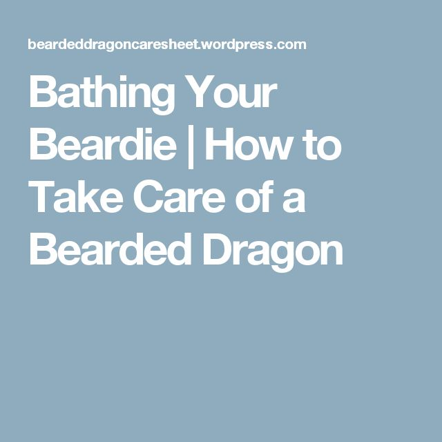 Bathing Your Beardie | How to Take Care of a Bearded Dragon