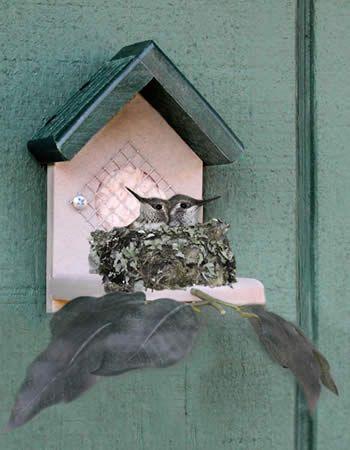 71b3f452dfd4f492096557dc0029f7d0 nester humming birds best 25 hummingbird house ideas on pinterest,How To Make A Hummingbird House Plans