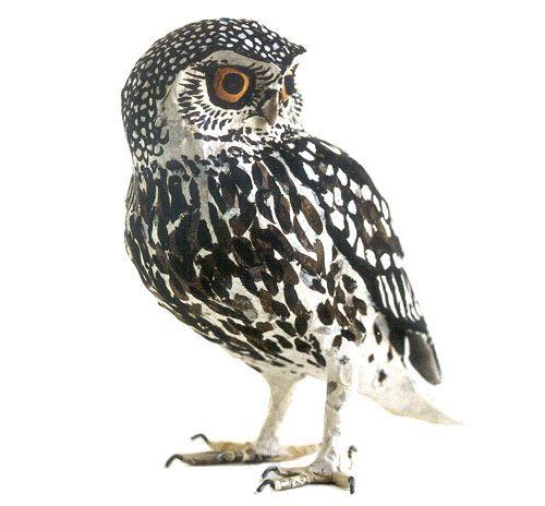 196 Words Short Essay on the Birds for kids