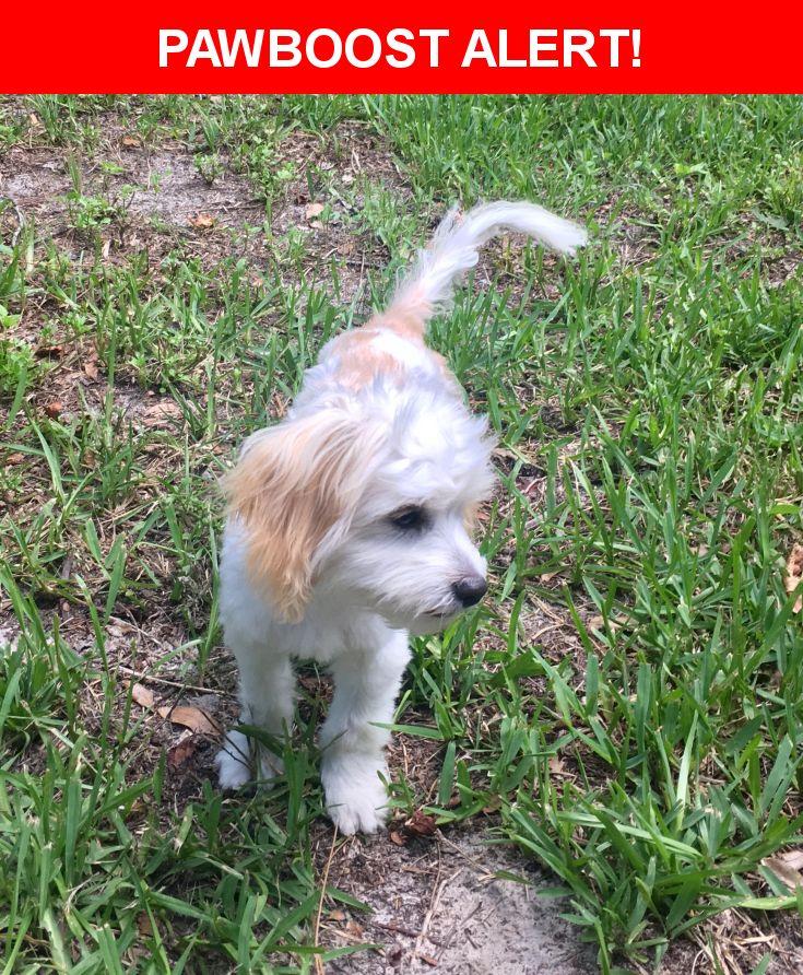 Please spread the word! Charlie was last seen in Jacksonville, FL 32210.    Nearest Address: Near Merrimac Ave & Blanding Blvd