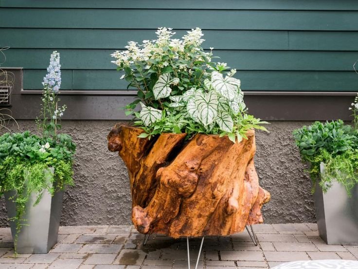 1050 best images about modern rustic home decor ideas on for Hollow tree trunk ideas