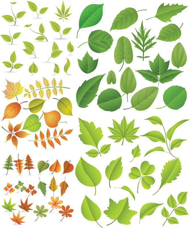 Best 25+ Leaves vector ideas on Pinterest Chalkboard boarders - editable leaf template