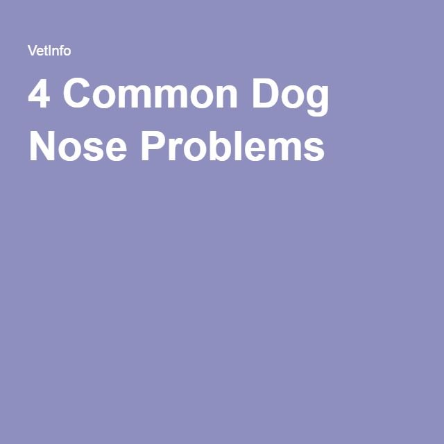 4 Common Dog Nose Problems