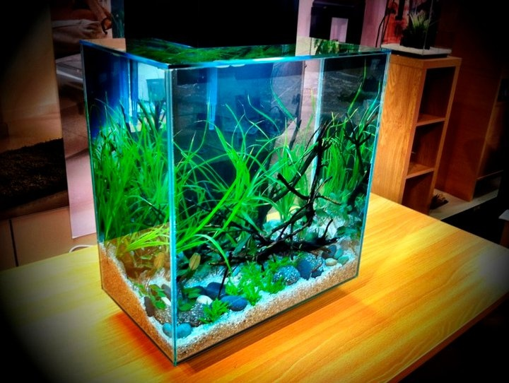 31 best Fluval Edge Aquarium images on Pinterest ...
