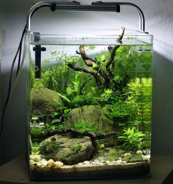 20 Amazing Aquarium Design