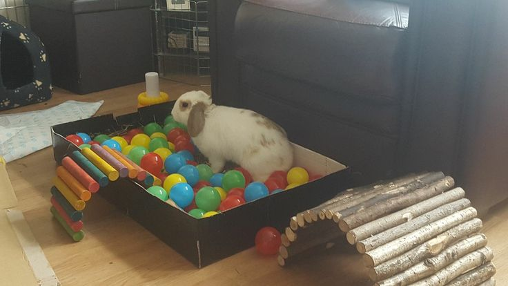 ball pit for digging enrichment. sprinkle a few treats in and watch bunny play