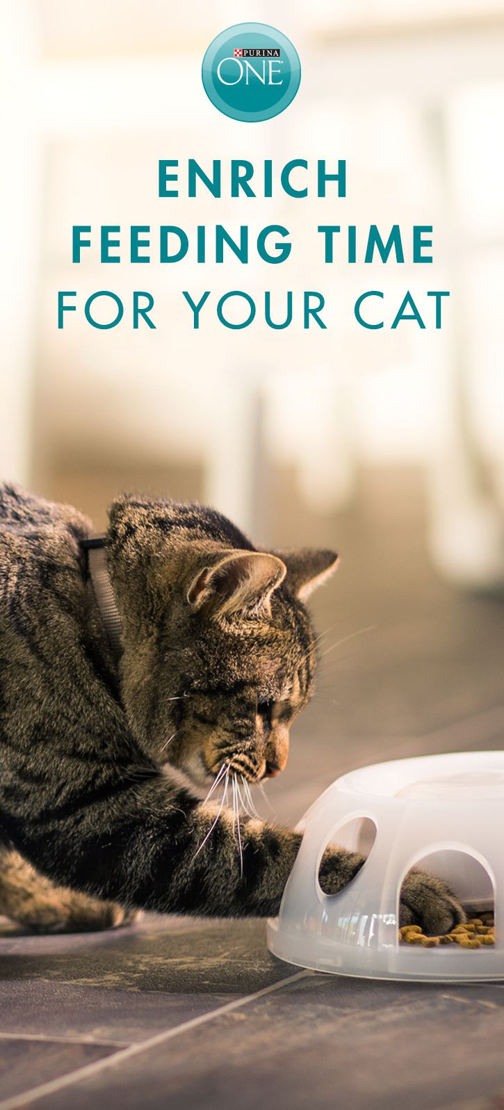 Put a little challenge on your cat's menu by hiding a small portion of the crunchy bites & meaty tender morsels of Purina ONE Tender Selects Blend With Real Chicken around the house or in a puzzle feeder, to appeal to your cat's desire for physical and mental stimulation during feeding time. With 32g of protein per cup, it provides the protein your cat needs as a carnivore and helps support strong muscles, including a healthy heart. Buy Purina ONE in-store today.